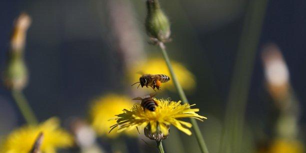 Les abeilles font partie des espèces menacées par la perte de biodiversité.