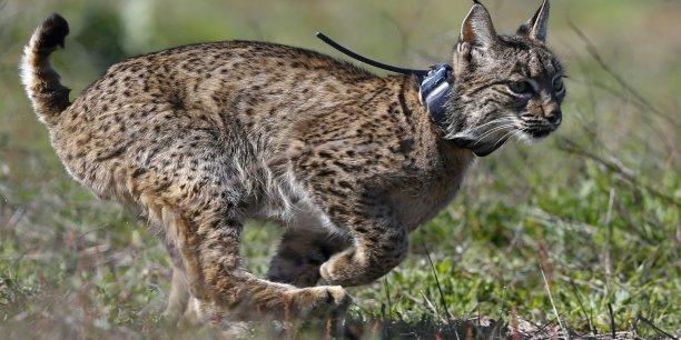 En Espagne, le parc national de la Donana, qui héberge le lynx ibérique et accueille chaque année des millions d'oiseaux migrateurs, a été victime en 1998 d'une vaste pollution par des déchets miniers (boues toxiques et eaux acides).