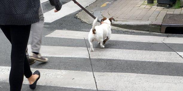 L'élaboration du profil ADN du chien coûterait entre 160 et 180 € au propriétaire, qui prendrait ainsi le risque de payer un profil génétique pour ensuite se faire verbaliser...