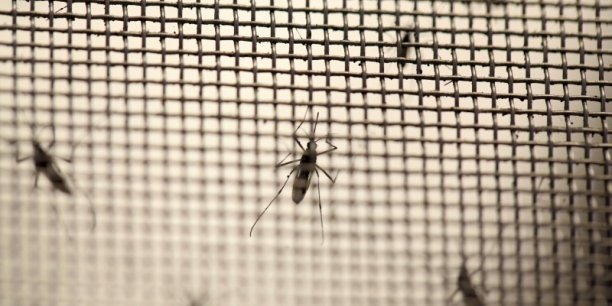 En 2016, plus de 36.000 ont été infectées par le virus Zika aux Etats-Unis.