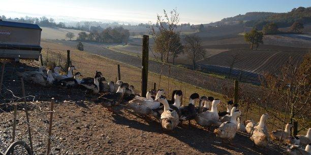 La grippe aviaire touche plusieurs départements du Sud-Ouest de la France.