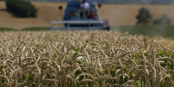 Les champs de blé ont souffert des mauvaises conditions météorologiques.
