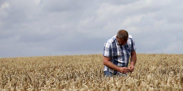 Un agriculteur inspecte son champ de blé début août à Bantouzelle (Hauts-de-France).