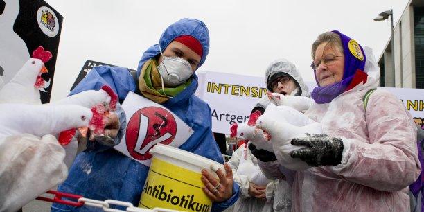 La résistance aux antibiotiques pourrait également provoquer une baisse annuelle d'entre 2,6% à 7,5% du volume de bétail et de la production de viande, prévoit la Banque mondiale.