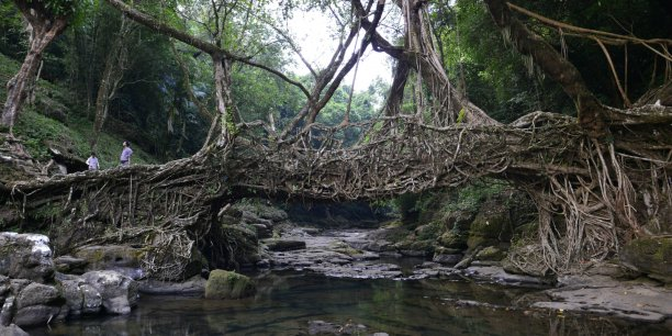 La sauvegarde des forêts en Inde est un défi pleinement quotidien.