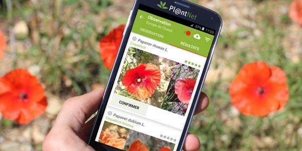 L'application Pl@ntNet permet d'identifier des plantes sauvages et d'établir leurs aires de répartition sur la planète.