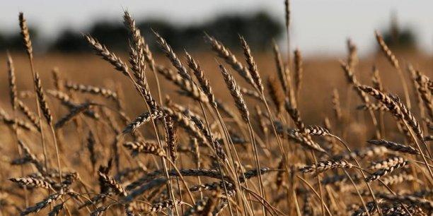 La FAO a également relevé sa prévision de production de céréales pour la campagne 2016-2016 à près de 2,566 milliards de tonnes, soit 40 millions de tonnes de plus qu'en 2015-2016.