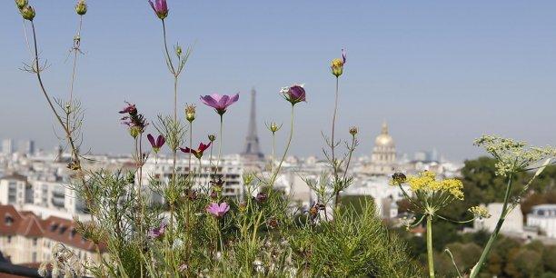 Si l'agriculture urbaine semble en plein essor, elle peine encore à trouver un modèle économique.