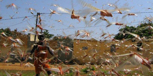 Plus de 6,1 milliards d'euros annuels sont notamment dépensés pour faire face aux coûts sanitaires, et ce sans compter le paludisme, dû essentiellement à un moustique présent naturellement, ni le virus Zika.