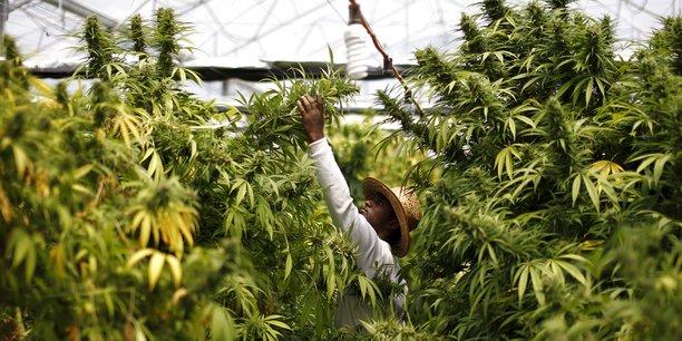 Le chiffre d'affaires du marché américain du cannabis s'élève à 5,4 milliards de dollars en 2015.