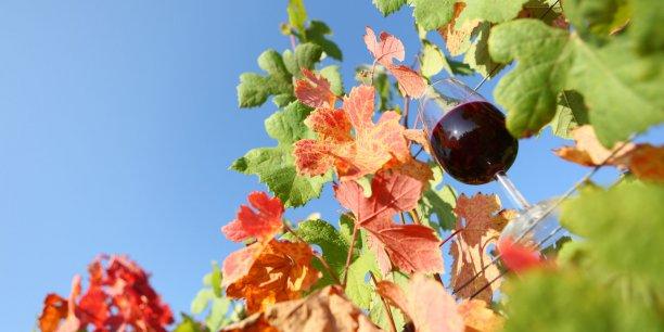 La récolte 2017 dans le vignoble bordelais sera impactée