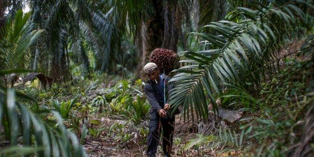 La décision européenne d'éliminer l'huile de palme n'a pas été bien accueillie par la Malaisie et l'Indonésie, principaux producteurs mondiaux. Ces deux pays l'accusent d'être protectionniste et menacent de représailles. Le gouvernement français s'oppose à cette décision, en raison des dommages collatéraux que pourraient subir les industries de la Défense et de l'Aerospace, fortement exportatrices vers l'Asie du sud-est.