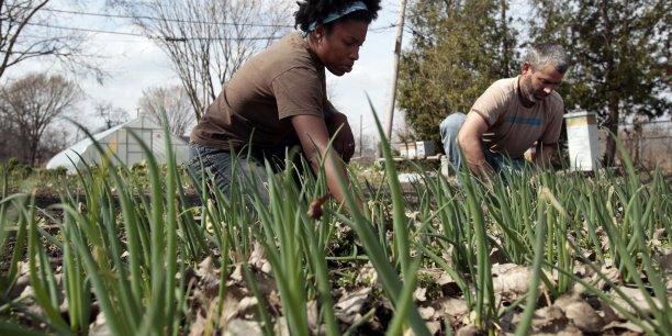 Le développement de nouvelles techniques de régénération végétale permet désormais d'augmenter significativement la productivité de l'agriculture urbaine, et donc de mener des expériences de production intéressantes sur de petites surfaces, soulignent Sabine Becker et François Rouillay.