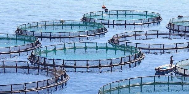 En 2018, le gouvernement a reçu 400 projets d'investissement dans le secteur aquacole.