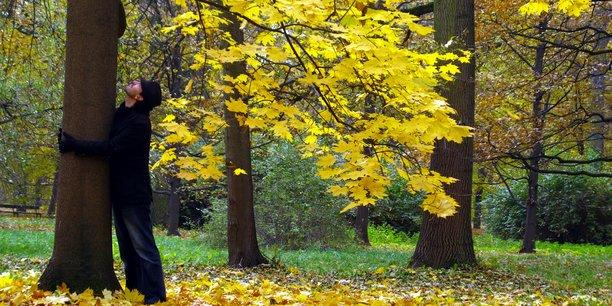 Un arbre prend de la valeur dans le temps, souligne Téophane Le Méné, l'un des fondateurs de l'entreprise. Eco Tree promet d'ailleurs un rendement compris entre 2% et 4% par an, à 10 ou 30 ans, selon le type d'espèce et son âge au moment de l'investissement.