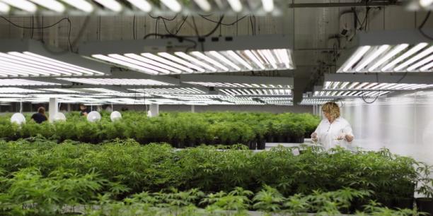 Si la légalisation du cannabis à usage récréatif aboutit au Canada, la mise en place des réseaux de distribution reviendrait à la charge des états fédérés.