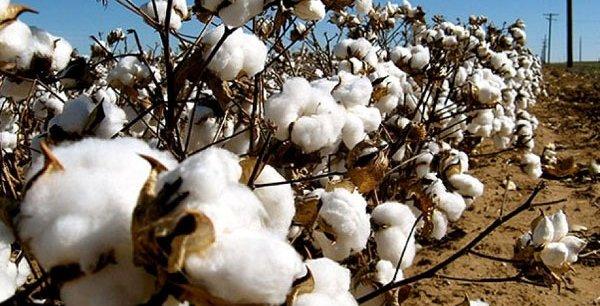 Au Burkina Faso, la production de coton de la campagne 2017-2018 s'élève à 553 000 tonnes.