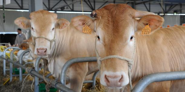 Le Salon de l'agriculture Nouvelle-Aquitaine se tiendra du 20 au 28 mai.