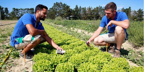 Avec son réseau de 1 600 agriculteurs, Staphyt travaille pour 400 clients sur 36 pays