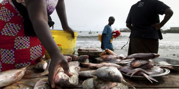 Au Sénégal, le volume des produits halieutiques débarqués sont estimés à 450 000 tonnes en moyenne annuelle.
