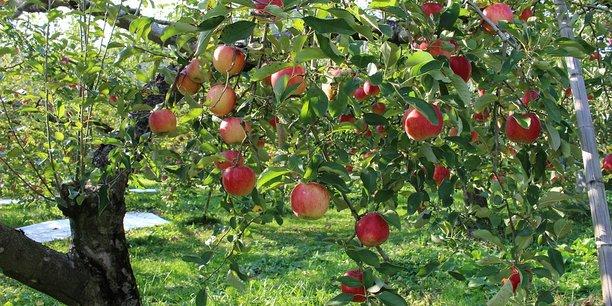 La communauté de communes du Pays Mornantais regroupe près de 300 exploitations agricoles dont de très nombreux arboriculteurs. Elle aimerait devenir le fournisseur privilégié de la Métropole lyonnaise et de ses 1,4 millions d'habitants, situés à quelques kilomètres.