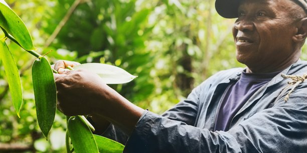 Madagascar concentre à elle seule 80% de la production mondiale de vanille.