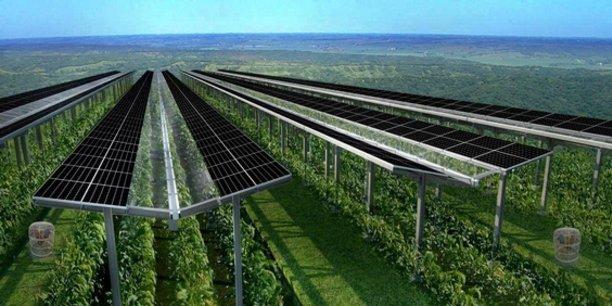 A la Réunion, 27.000 panneaux photovoltaïques recouvrent des serres anticycloniques