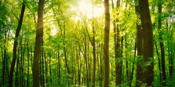 la start up eco tree propose d 39 investir dans des arbres. Black Bedroom Furniture Sets. Home Design Ideas