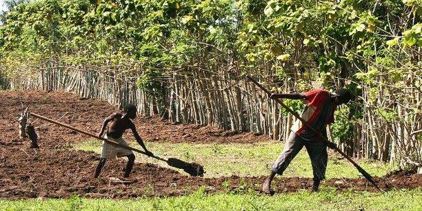 En juin 2010, le Sénégal a lancé un Programme national d'autosuffisance en riz (PNAR) visant particulièrement les zones du pays propices à la riziculture : la vallée du fleuve Sénégal ; la vallée du fleuve Gambie ; et le Bbassin de l'Anambé et les bas fonds.
