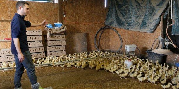 Les éleveurs du Sud-Ouest ont du faire abattre préventivement des centaines de milliers de palmipèdes.