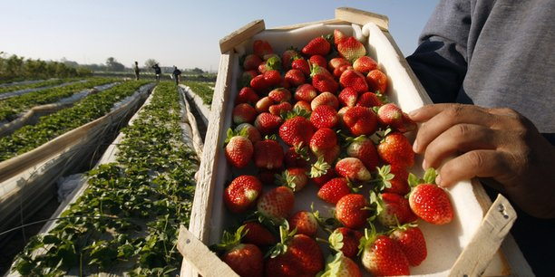 L'année dernière, la fraise égyptienne a été mise en cause par les médias américains dans la propagation du virus de l'hépatite A dans l'Etat de Virginie aux Etats-Unis.