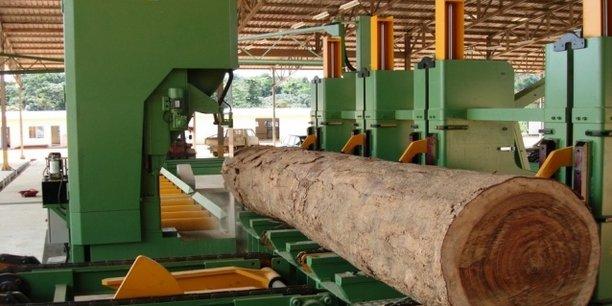 Avec une contribution attendue de 10% au PIB, la filière forêt-bois a une place de choix dans la politique de diversification de l'économie gabonaise.