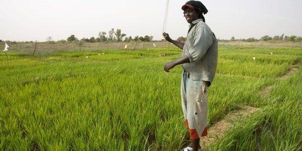 En 2017, la production dans pratiquement l'ensemble des filières agricoles au Sénégal a augmenté de manière significative : +20% pour la production céréalière ; +7% pour les cultures rizières ; et +37 pour la production de mil.