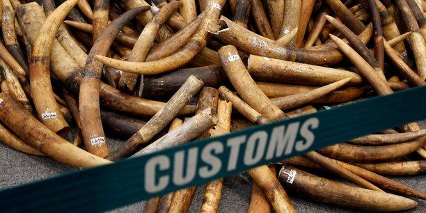 Le braconnage est un facteur majeur du déclin rapide du nombre d'éléphants d'Afrique, dont 30.000 individus sont abattus chaque année, selon les ONG.