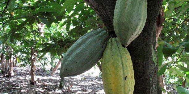 La Côte d'Ivoire et le Ghana représente environ 60% de la production mondiale de cacao.