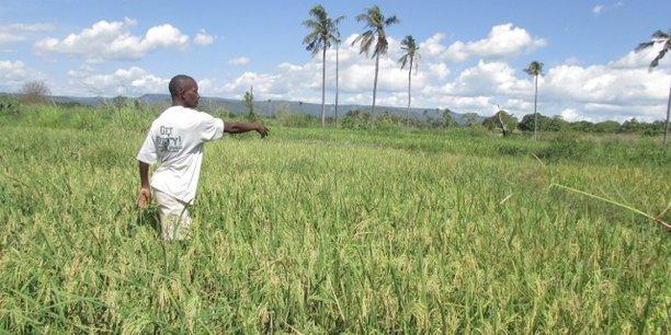 Rwanda : la Banque mondiale débloque 71 millions de dollars pour le secteur agricole