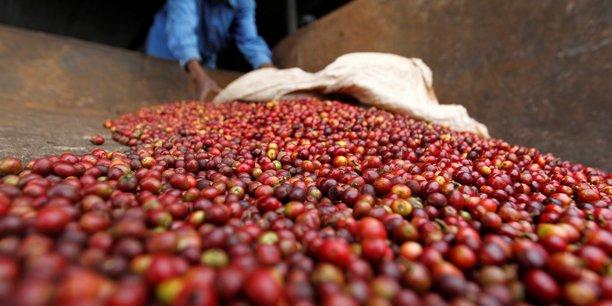 En RDC, le nombre de producteurs de café est passé de 300 à 20 en l'espace de quatre décennies.