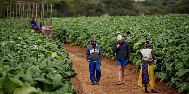 Une exploitation agricole de culture du tabac, le 28 novembre 2017, à l'est de la capitale zimbabwéenne Harare.