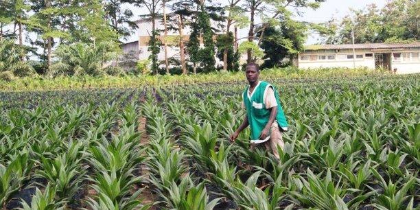 Le Nigeria, gros consommateur d'huile de palme à l'image de nombreux pays africains, occupe aujourd'hui la cinquième place mondiale en terme de production.