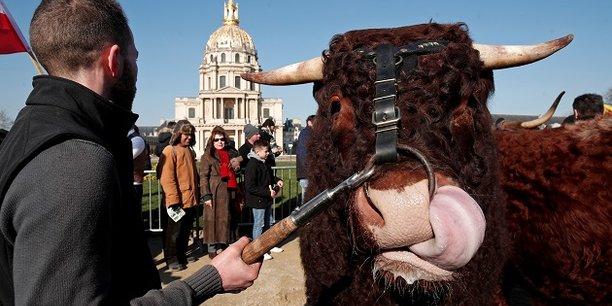 En 2016, les prix de vente des bovins (broutards, taurillons, veaux de boucherie et vaches de réforme) ont été tirés à la baisse par l'afflux de vaches laitières de réforme qui a pesé sur les cours de toutes les catégories d'animaux souligne le ministère de l'Agriculture.