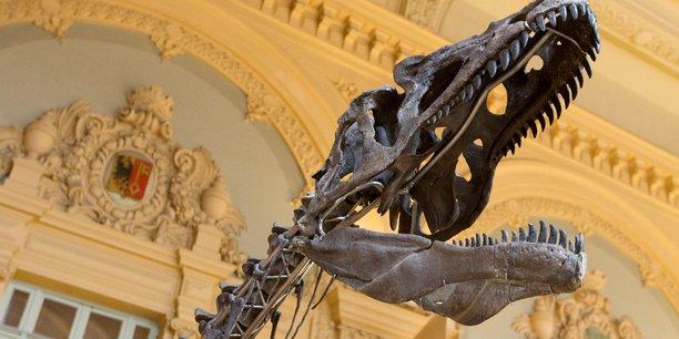 Un specimen d'une espece de dinosaure inconnue aux encheres[reuters.com]