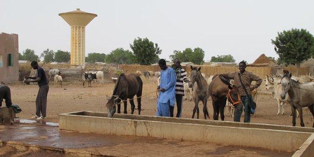 Entre 2008 et 2015, l'Agence sénégalaise d'insertion et de développement agricole a mis sur pied 79 fermes villageoises et familiales dans lesquelles travailleraient aujourd'hui quelque 10 000 jeunes agriculteurs.