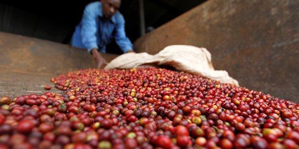 Parmi les produits les plus exportés par l'Ethiopie, on citera le café (photo) dont il est le premier exportateur en Afrique, le thé et les épices.