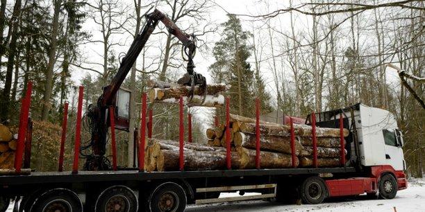 Foret de bialowieza: la pologne a enfreint le droit, juge la cjue[reuters.com]