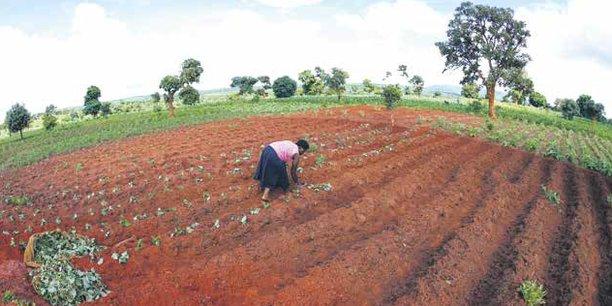L'accompagnement technique du projet sera assuré par la FAO et ONU Femmes, très impliquées sur le terrain en RDC.