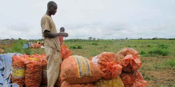 D'après le FIDA, le développement des chaînes de valeur agricoles en Guinée reste difficile, car les institutions et le cadre réglementaire sont faibles, les services gouvernementaux fonctionnent mal, et les infrastructures de base sont toujours insuffisantes.