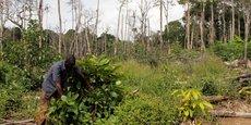 Selon la Banque mondiale, la déforestation fait partie des phénomènes qui amplifient les effets du changement climatique en Côte d'ivoire, ce qui ménace le dynamisme de l'économie du pays.