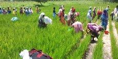 Le nouveau projet de la FAO lancé au Sénégal L'idée est devrait faciliter l'accès à l'eau potable aux populations rurales et permettre de disposer de suffisamment d'eau pour les activités agricoles.