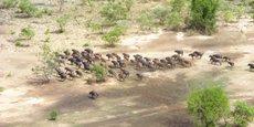 Située dans la savane de l'Afrique occidentale, la réserve de biosphère d'Arly du Burkina Faso présente une large variété de paysages déterminés par le relief : marécages, forêts de galerie, forêts claires et savanes d'arbustes et d'arbres.