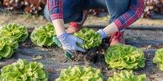 Pour choisir ses aliments en fonction des saisons ou des modes de production, le rôle de l'école sera à l'avenir essentiel.